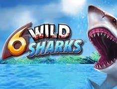 6 Wild Sharks logo
